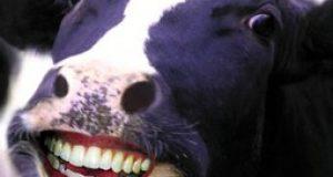 frases para facebook - la vaca