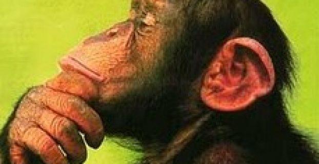 un mono pensando